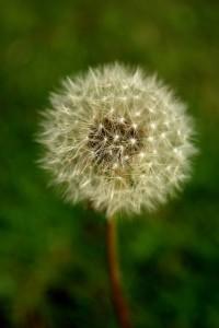 Natures Fuzz Ball - Uduak Inyang
