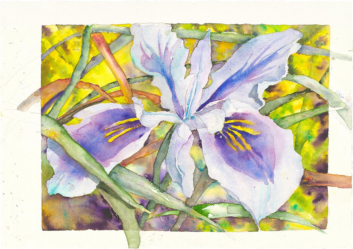 Wild Iris - Barbara Smithson