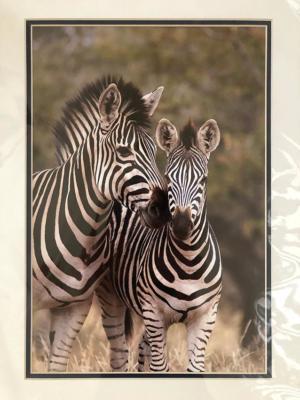 <em>Portraits of Africa</em> Double-Matted Print